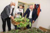 İpek Böcekçiliği Belediyelerin İşbirliği İle Tekrar Canlanıyor