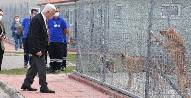 Başkan Gürün Geçici Hayvan Bakımevini Ziyaret Etti
